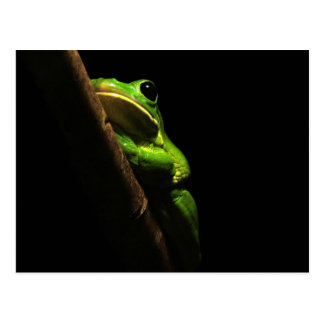 Green climbing Frog on black background Postcard