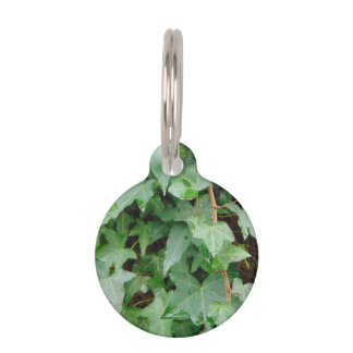 Green Climbing Ivy 0237 Pet ID Tag