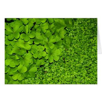 Green Clover Card