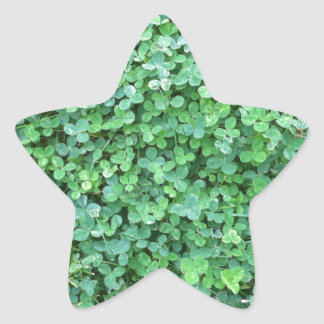 Green Clover Nature Photo Star Sticker