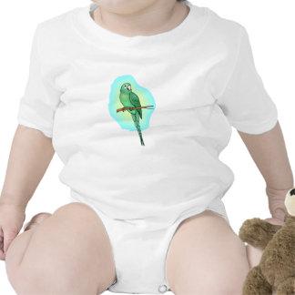 Green Conure Bird Baby Creeper