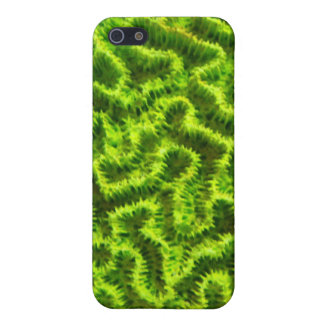 green coral ipod touch case iPhone 5 cover