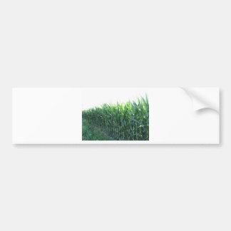 Green corn field on summer day bumper sticker