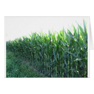 Green corn field on summer day card