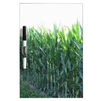 Green corn field on summer day Dry-Erase whiteboard