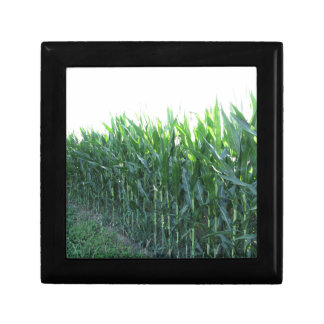 Green corn field on summer day jewelry boxes