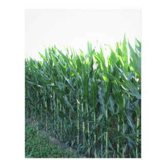 Green corn field on summer day letterhead template