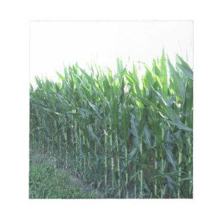 Green corn field on summer day notepads