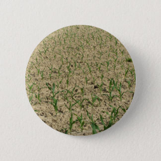 Green corn maize field in early stage 2 inch round button