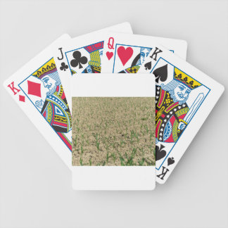 Green corn maize field in early stage bicycle playing cards