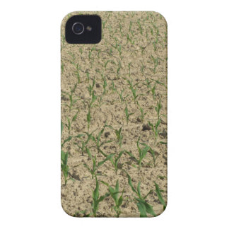 Green corn maize field in early stage iPhone 4 case