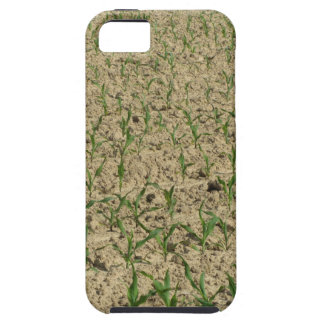 Green corn maize field in early stage iPhone 5 case