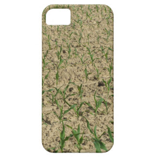 Green corn maize field in early stage iPhone 5 cases