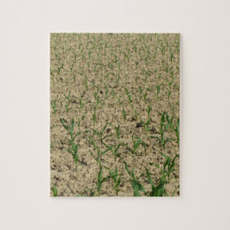 Green corn maize field in early stage jigsaw puzzle