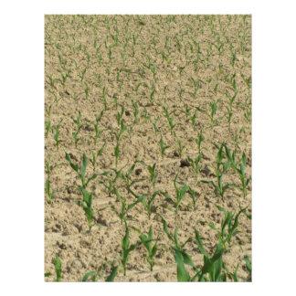 Green corn maize field in early stage letterhead