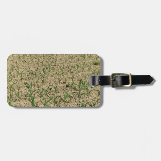 Green corn maize field in early stage luggage tag