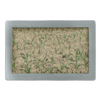 Green corn maize field in early stage rectangular belt buckle