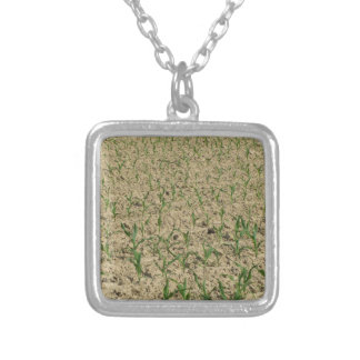 Green corn maize field in early stage silver plated necklace