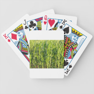 Green corn plants are growing in summer bicycle playing cards