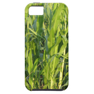 Green corn plants are growing in summer case for the iPhone 5