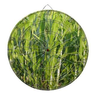 Green corn plants are growing in summer dartboard