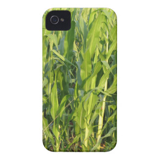 Green corn plants are growing in summer iPhone 4 cover