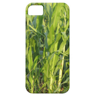 Green corn plants are growing in summer iPhone 5 cover