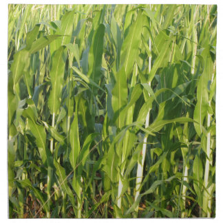 Green corn plants are growing in summer napkin