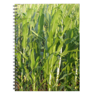 Green corn plants are growing in summer notebook