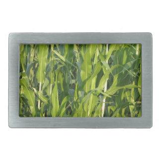Green corn plants are growing in summer rectangular belt buckle
