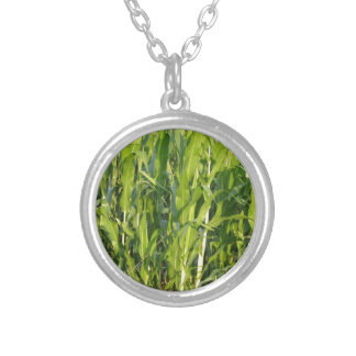Green corn plants are growing in summer silver plated necklace