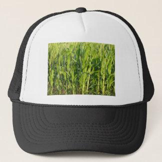 Green corn plants are growing in summer trucker hat