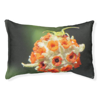Green Crab Spider on Flower Pet Bed