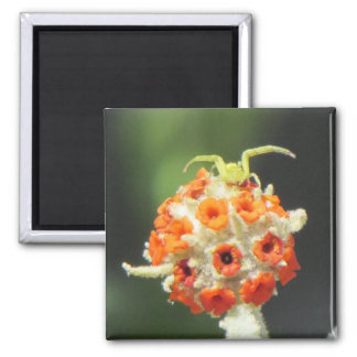 Green Crab Spider on Flower Square Magnet