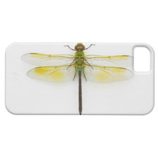 Green darner (Anax junius) on white background, Case For The iPhone 5