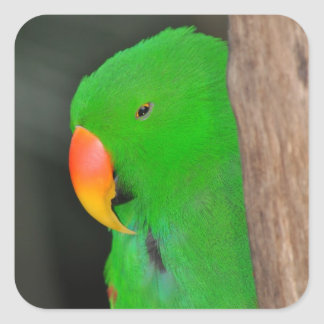 Green eclectic parrot sticker