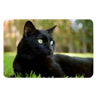 Green Eyed Black Cat Enjoying the Outdoors Magnet