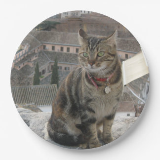 Green eyed cat photography Paper plate
