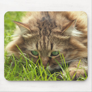 Green Eyed Hunter Mouse Pad