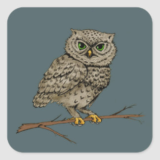 Green eyed owl square sticker