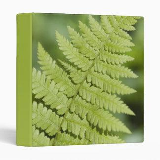Green Fern Frond Binder
