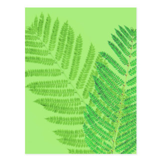 Green Fern Postcard