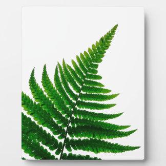 Green Fern prints Woodlands Leaf Plaque