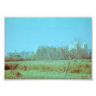 Green Field Photo Print