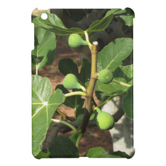 Green figs ripening on a fig tree case for the iPad mini