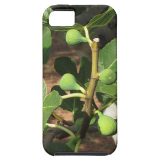 Green figs ripening on a fig tree iPhone 5 cover