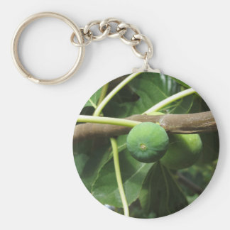 Green figs ripening on a fig tree keychain