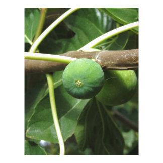 Green figs ripening on a fig tree letterhead