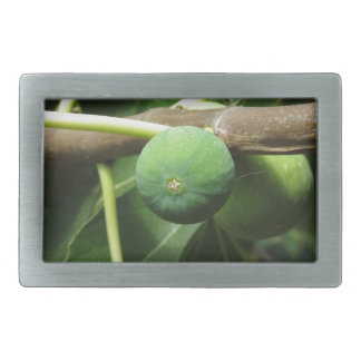 Green figs ripening on a fig tree rectangular belt buckles
