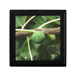 Green figs ripening on a fig tree trinket boxes